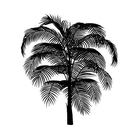 Silhueta de palmeira em fundo branco