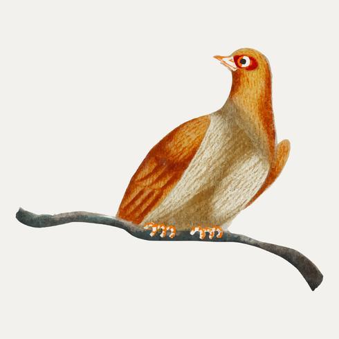 Kinesisk målning av en fågel.