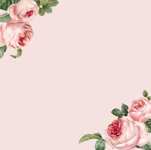 Struttura rosa disegnata a mano delle rose sul vettore rosa del fondo di pastello