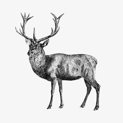 Red deer schaduwtekening