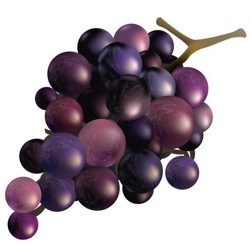 Illustratie van druiven die op witte achtergrond worden geïsoleerd