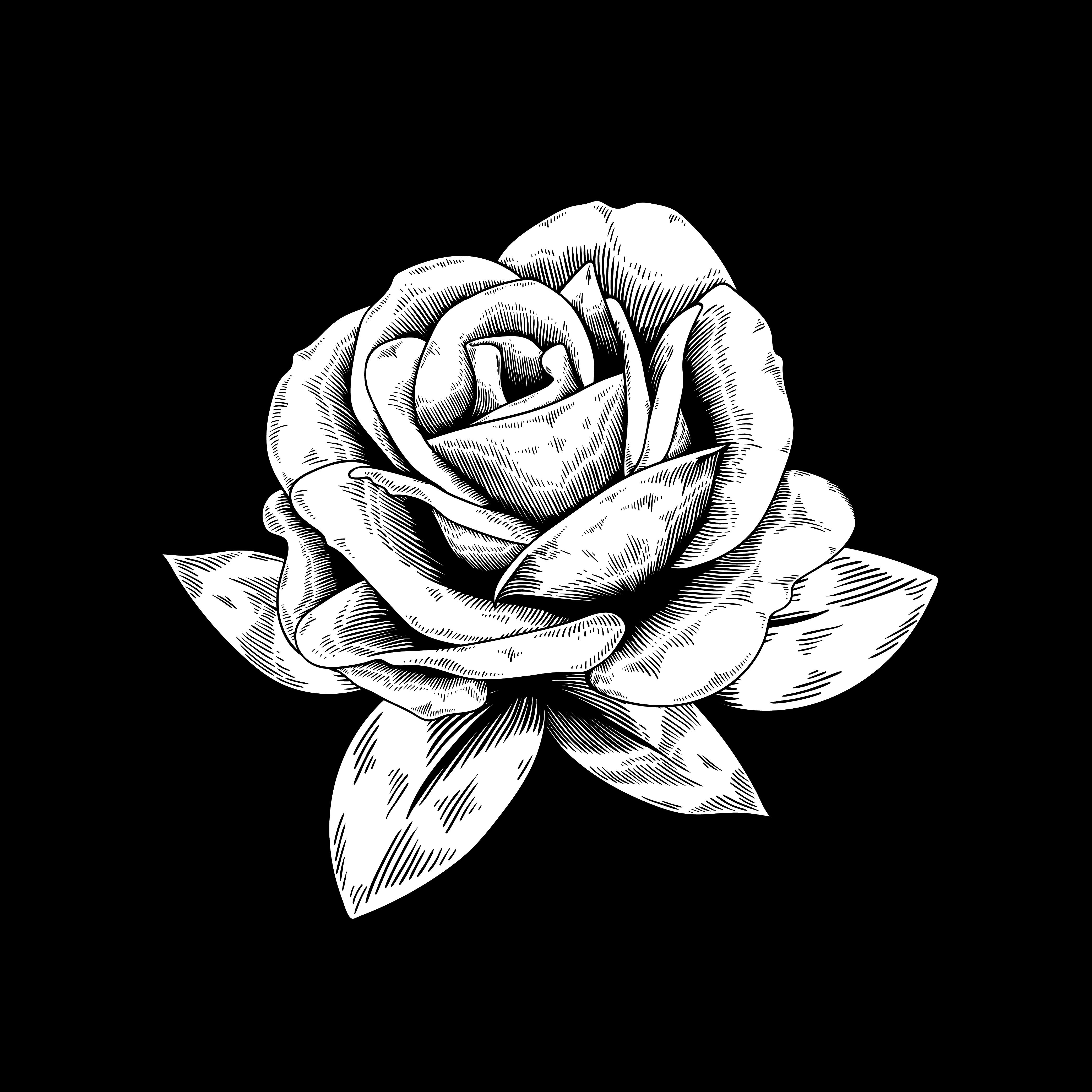 玫瑰剪影 免費下載   天天瘋後製