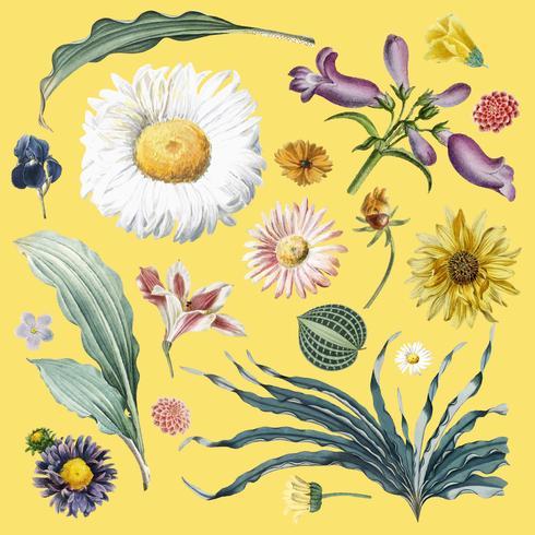 Patrón de fondo floral vector