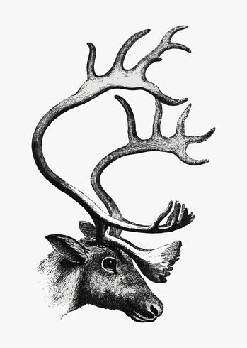Deer shade drawing