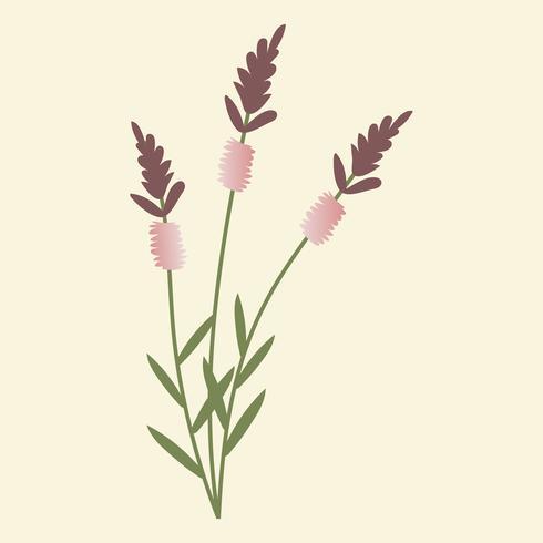 Ilustração em vetor de flor selvagem