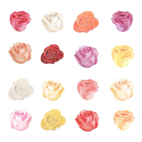 Ilustração, de, desenho, rosa, flores