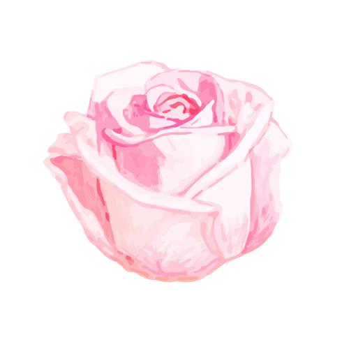 Illustration of drawing rose flower vector