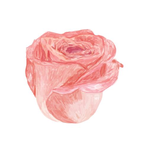 手繪玫瑰花 免費下載 | 天天瘋後製