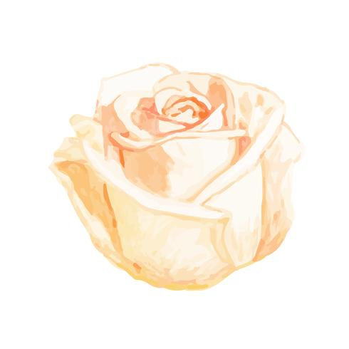 Illustration de dessin fleur rose blanche