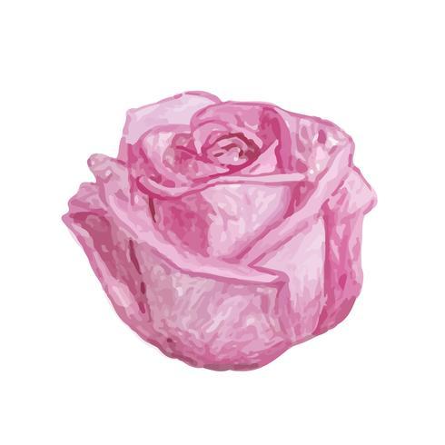 Illustrazione di disegno fiore rosa