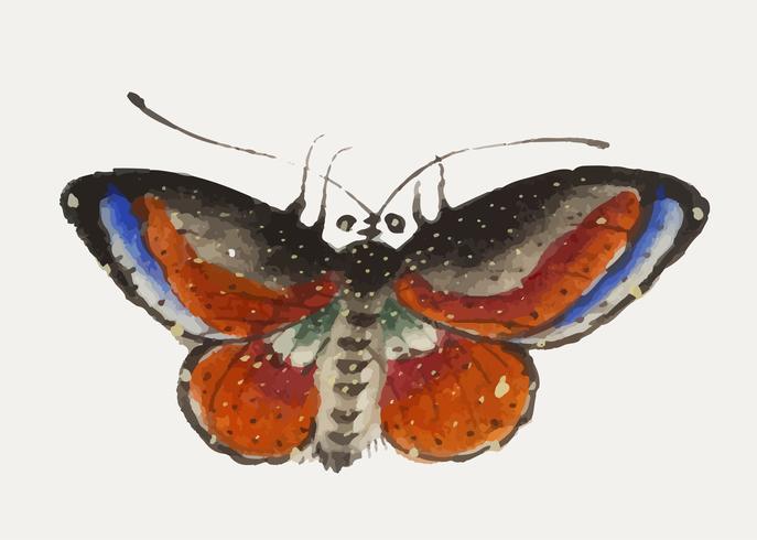 Kinesisk målning en färgstark fjäril.