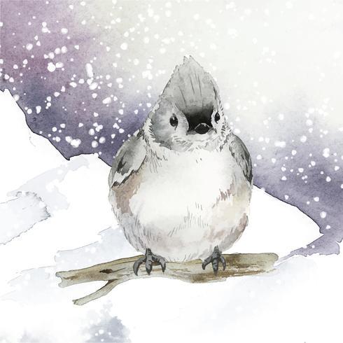 Pássaro tufted do titmouse no vetor da aquarela do inverno