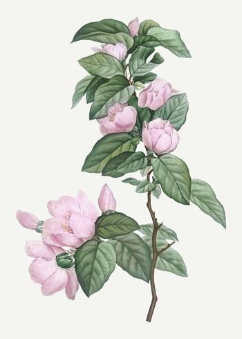 Blommande rosa blommor