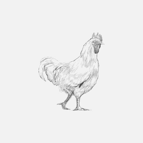 Estilo de desenho de ilustração de frango