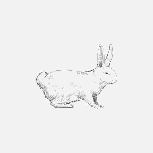 Illustrationszeichnungsart des Kaninchens