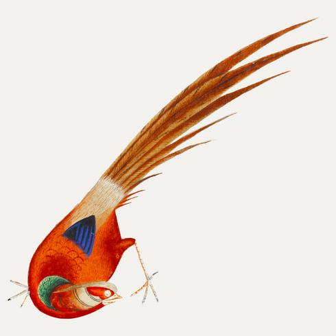 Pintura chinesa de um pássaro.