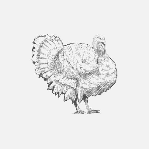 Illustration drawing style of turkey