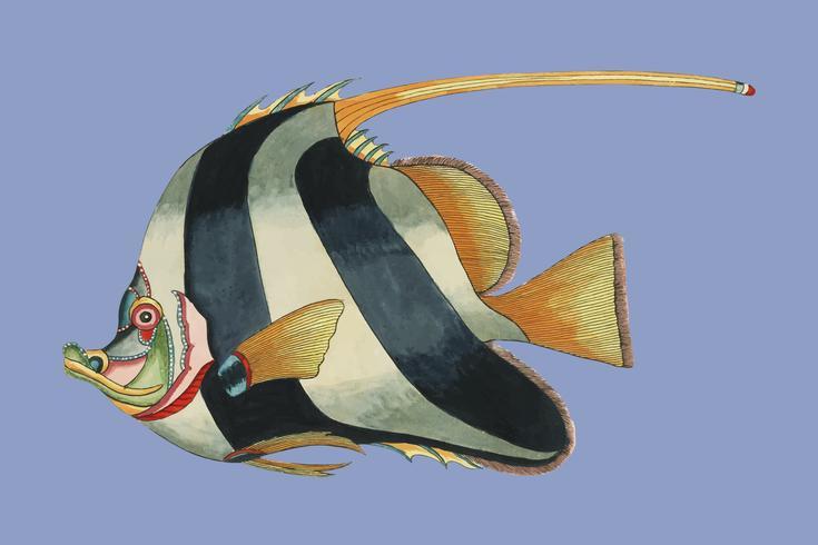 Kleurrijke en surrealistische afbeeldingen van vissen gevonden in Molukken (Indonesië) en Oost-Indië door Louis Renard (1678 -1746) van Histoire naturelle des plus rares curiositez de la mer des Indes (1754). Digitaal verbeterd door rawpixel.