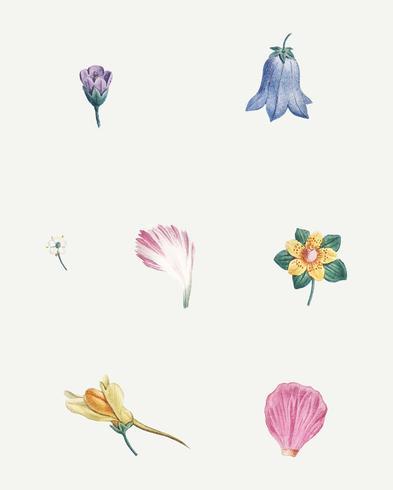 Flores E Petalas Download Vetores Gratis Desenhos De Vetor
