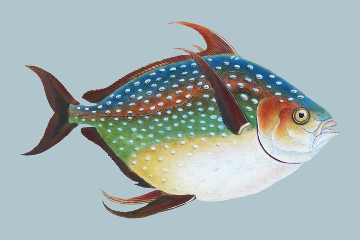 Weinlese-Fischabbildung