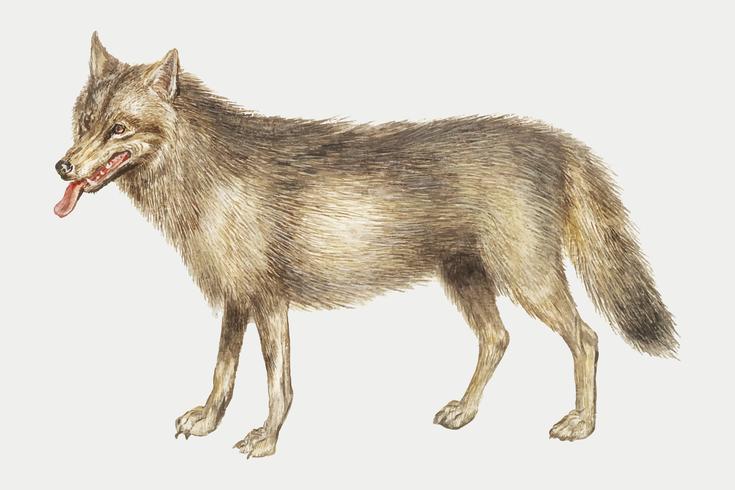 Wolf in vintage stijl