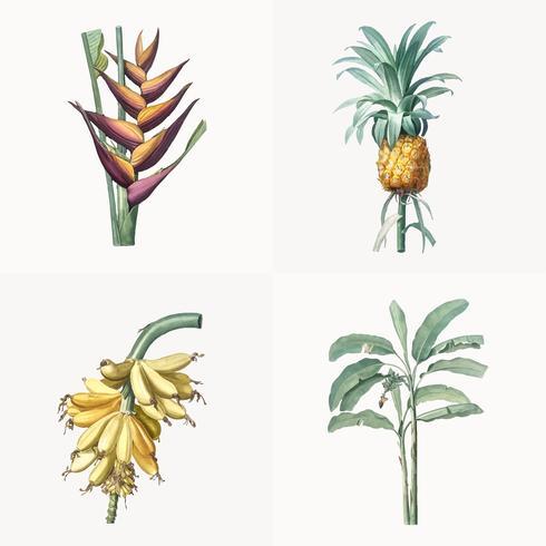 Tappning illustration av uppsättning av tropisk växt
