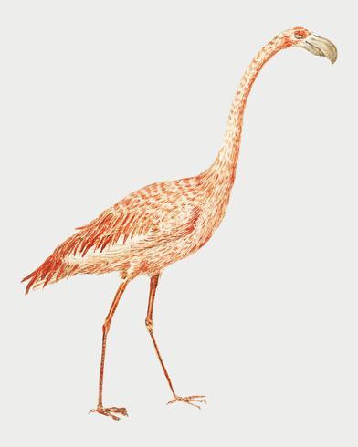 Flamingo en estilo vintage