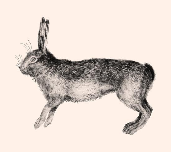 Hare i vintage stil