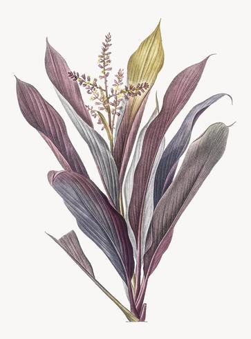 Lila växt