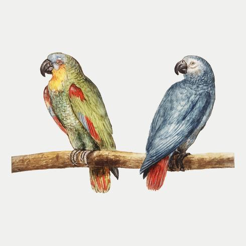 Papegaaien in vintage stijl