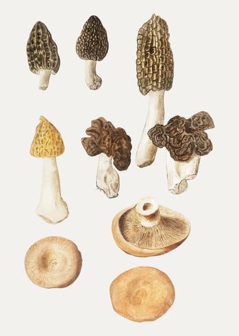 Pilze im Vintage-Stil