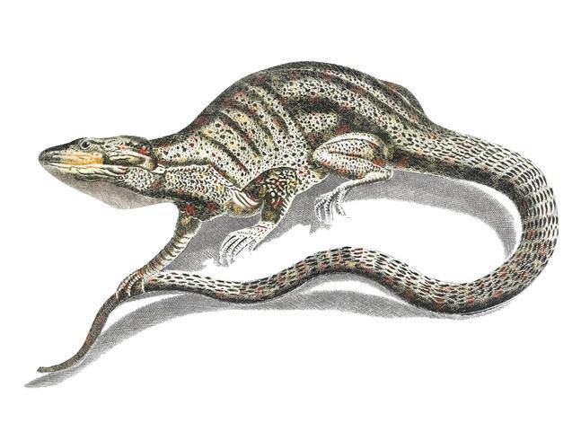 Ilustração vintage de um lagarto