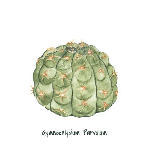 Cactus di parvulum di gymnocalycium disegnato a mano