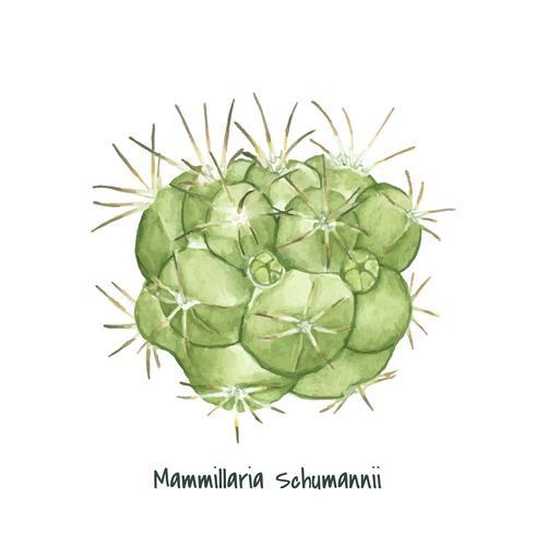 Handritad mammillaria schumannii pincushion kaktus