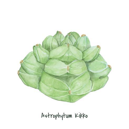 Handritad astrophytum kikko kaktus