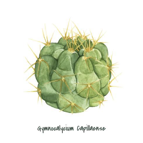 Cactus gymnocalycium capillaense dessiné à la main