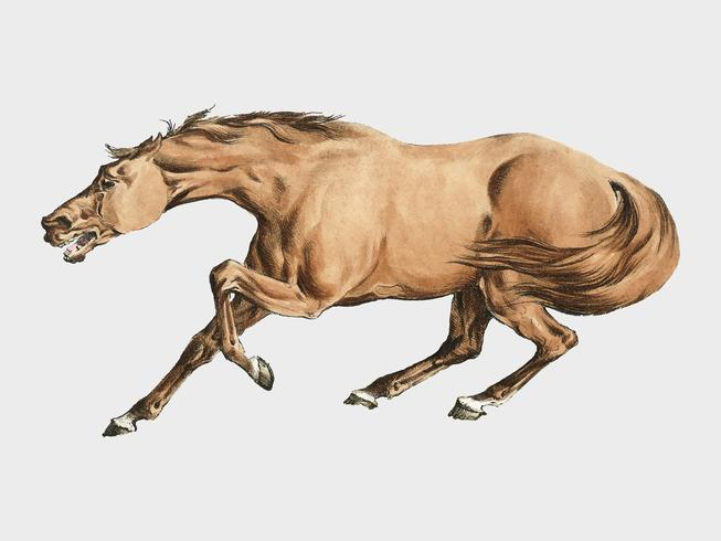 Illustration d'un cheval brun clair de Sporting Sketches