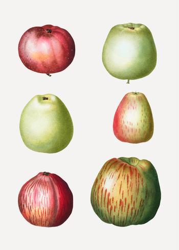 Dibujos de manzanas vintage