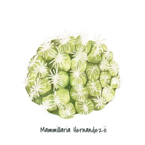 Handritad mammillaria hernandezii pincushion kaktus