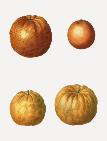 Various oranges