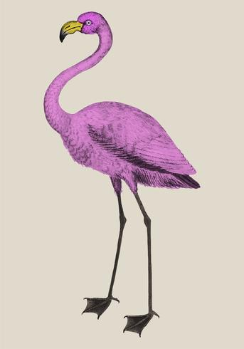 Pink flamingo in vintage style
