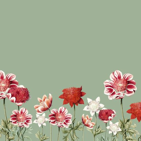 Dibujado a mano marco de flor de anémona roja y blanca