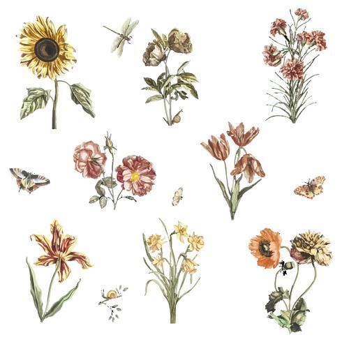 Vintage illustratie van verschillende bloemen