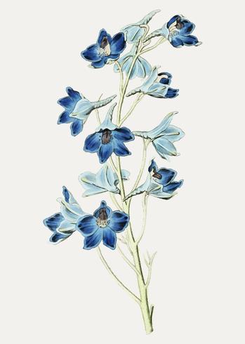 Blue flower branch