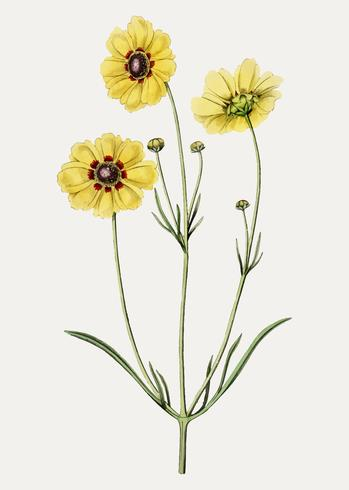 Flor de semilla