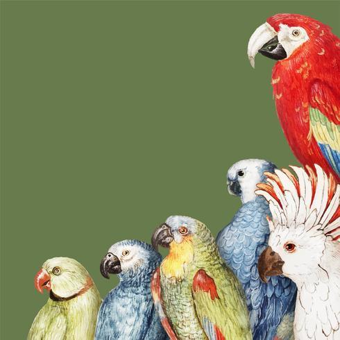 Parrots border frame