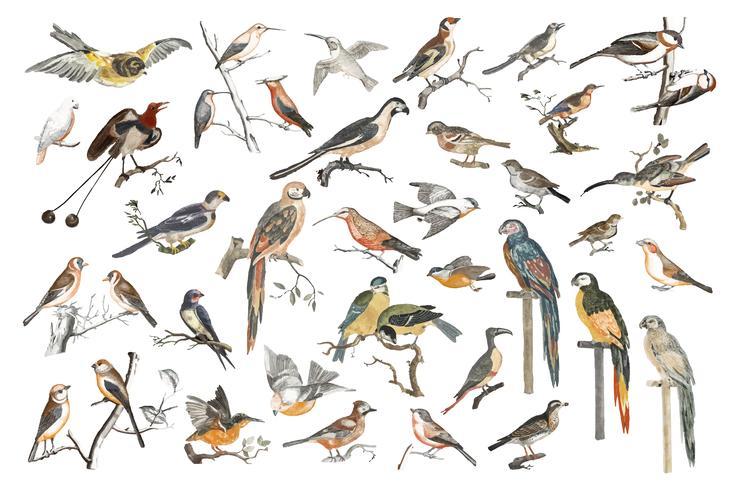 Ilustración vintage de varias especies de aves