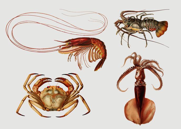 Varietà di frutti di mare vettore