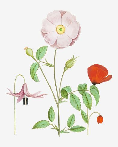 Dogstand blomma, vildrosa och papaver