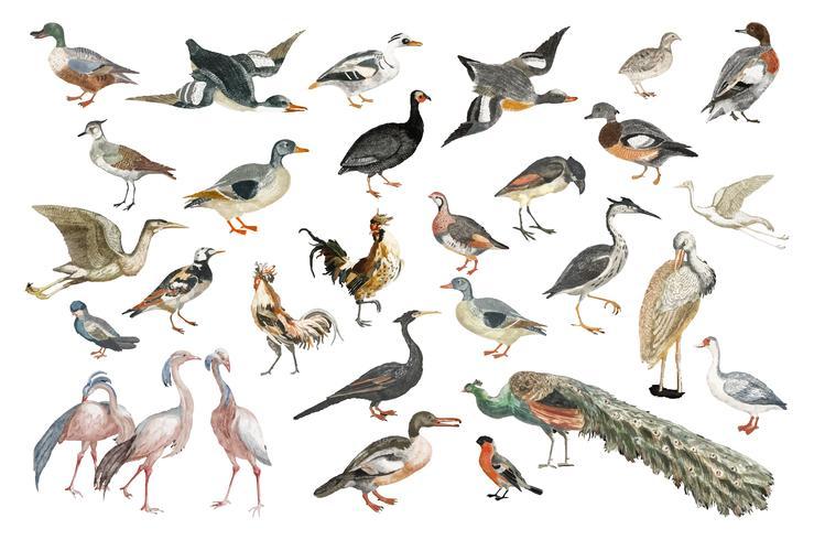 Illustrazione d'epoca di varie specie di uccelli